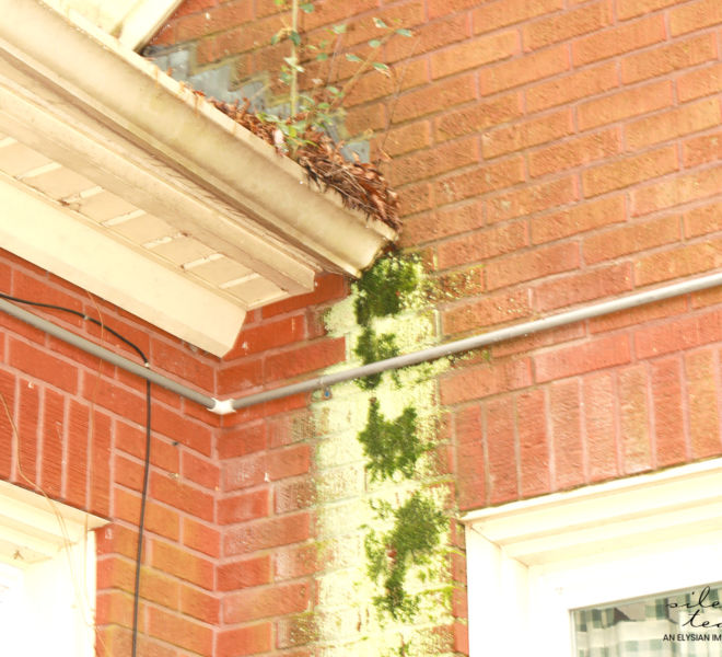 Foothills Alliance- Fungus/Mold Outside Brick Building