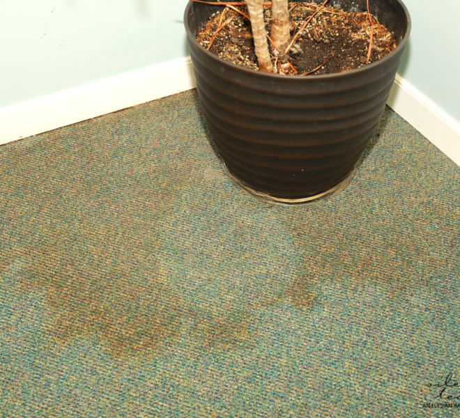 Foothills Alliance- Water damage and plant